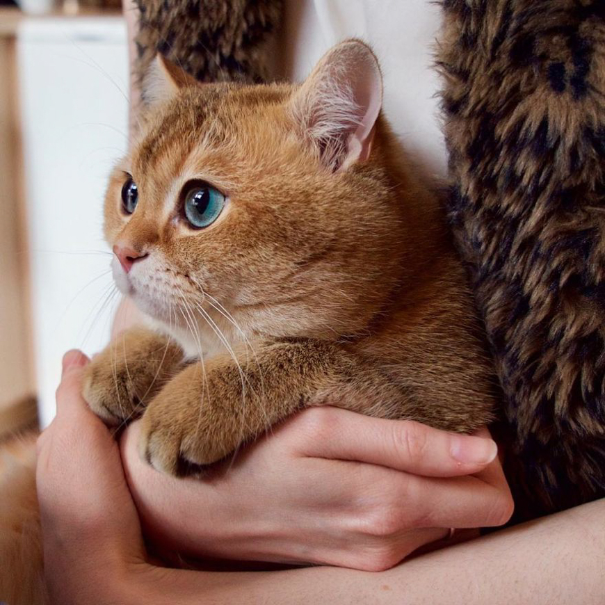 Meet Hosico, super cute cat with green eyes
