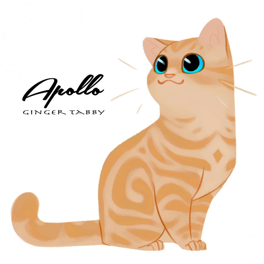 Apollo as cat