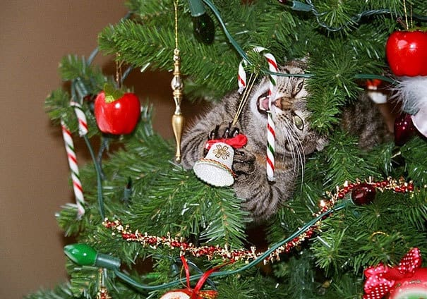 Cats againts the christmas tree