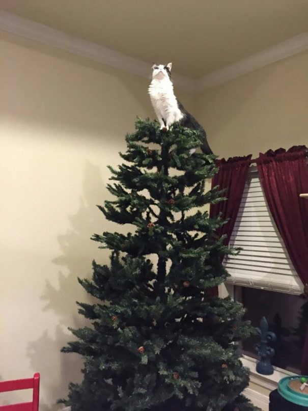 Cat star on christmas tree