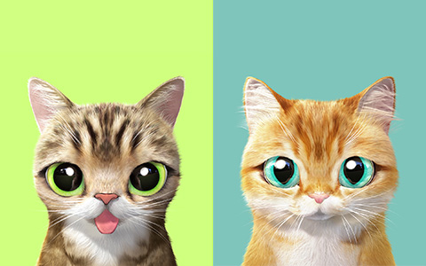 Super Cute and bright phone wallpapers with cats
