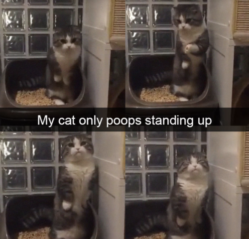Cutest Snapchats with cats in 2018