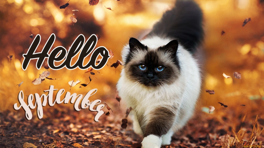 Hello september image with cat