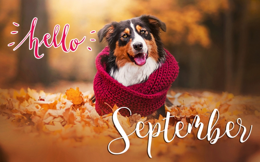 Hello september new images