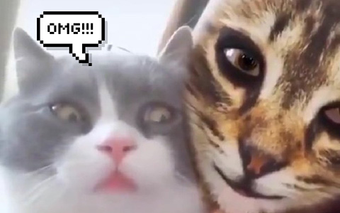 Don't show your cats the virtual cat masks, they're