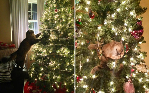 19 fluffy warriors who declared war on Christmas trees, and they would make everyone laugh, except for the  cat owners