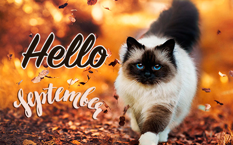 Have a happy first day of september with these new Hello September images